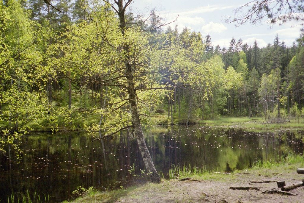 Test our tough hike in beautiful Hälsingland