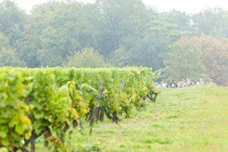 VITILOIRE WINE FESTIVAL - 2DAYS/1 NIGHT from 111 €/person