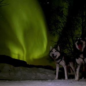 Dogs Sledding and Northern Lights hunting