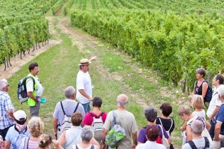 WINES VIN AND HIKING AROUND AZAY-LE-RIDEAU - 2DAYS/1NIGHT - from 99 €/person