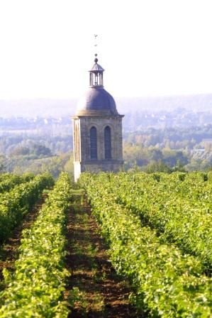 WINES, VINE AND HIKING AROUND VOUVRAY