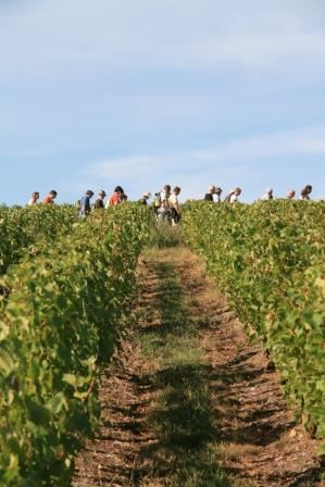 WINES VIN AND HIKING AROUND CHINON - 2DAYS/1NIGHT - from 93 €/person