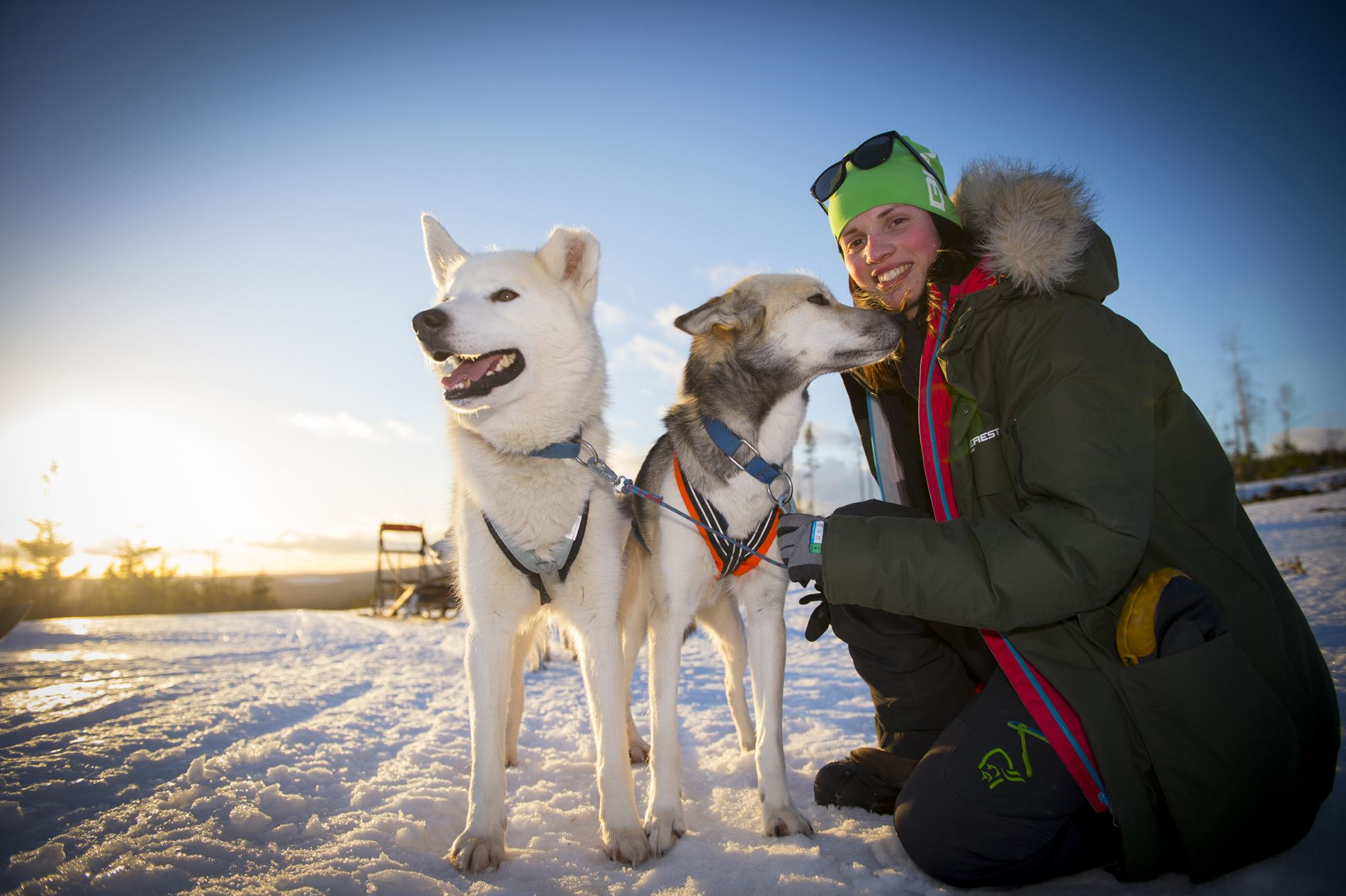 Dogsled tour with accommodation including dinner