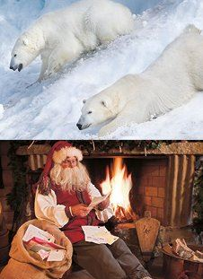 Fairytale and polar bear package