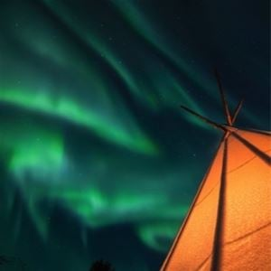 Northern Lights & Arctic Animals