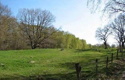 Lisbeth Borgström, Skåneleden - Osterlen trail