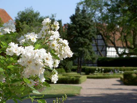 Bergengrenska Trädgården