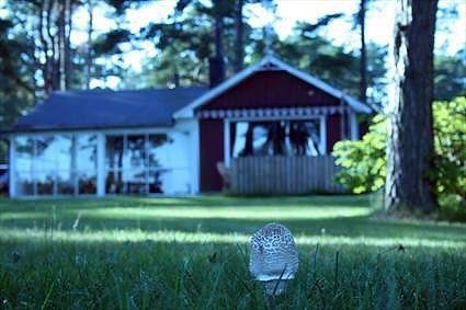 Cottage - Fårabäck (Susanne Sjölin)
