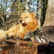 Jakt, Fiske eller vandring - Nordic Footprints