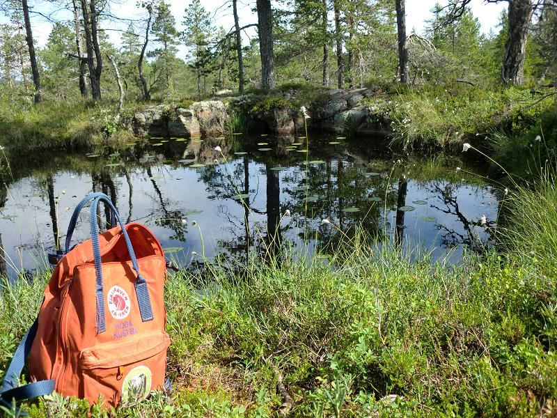 Naturen ligger nära inpå Skuleskogens Pensionat och sommarcafé