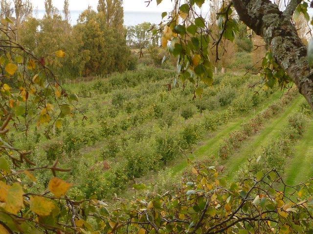 Olofsbergs Frugtplantage