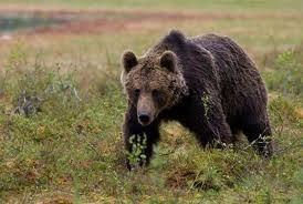 Björn och Natur - Nära dig