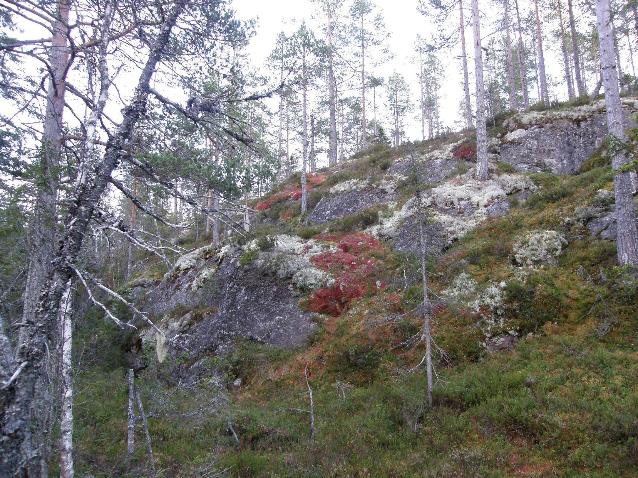 Stugvandring med 3 alternativ - Vandring söder om Sundsvall
