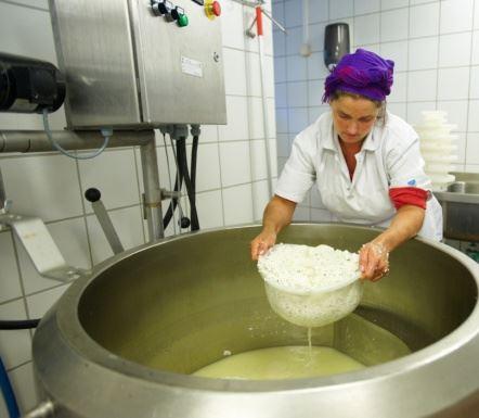 Lag økologisk ost med ostebonde i Lofoten denne sommeren!