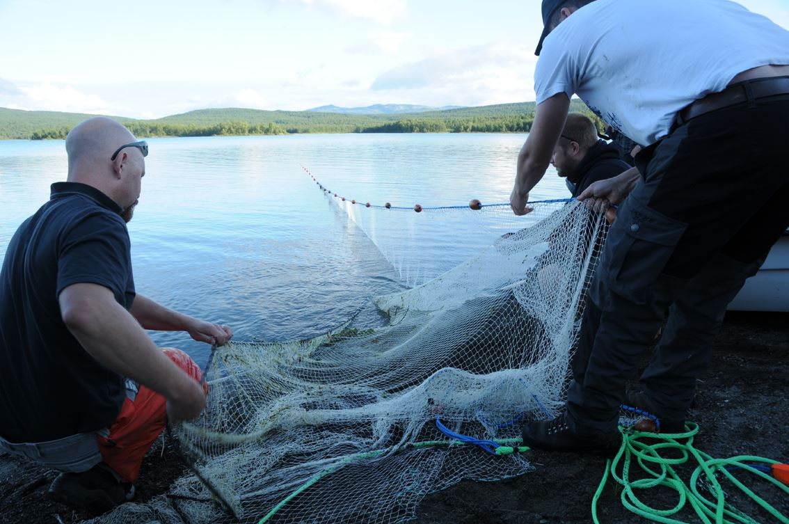 Notdragning i Joeström - en del i fiskefestivalen