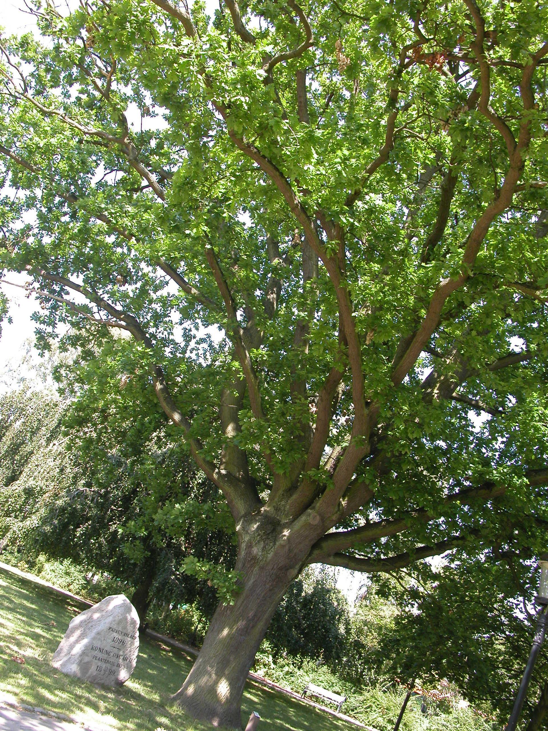 Stadsparken har ett 60-tal olika träd och buskar.