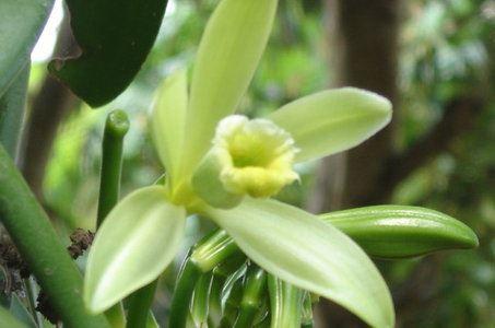 Plantation Vanilla Bourbon