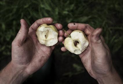 © Daniel Berlin, Händer med äpplen