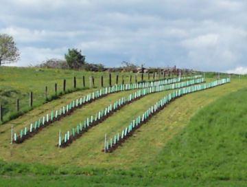 Hobjersgårdens vinproduktion