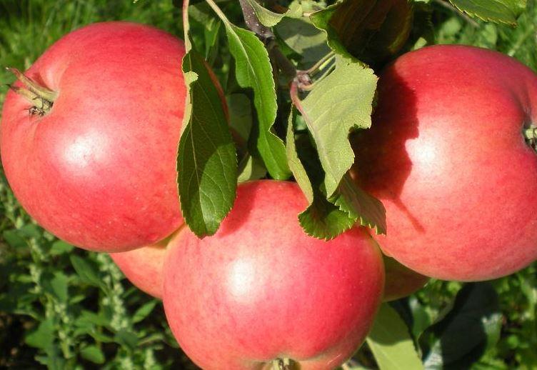 Kivikås Frukt & Must