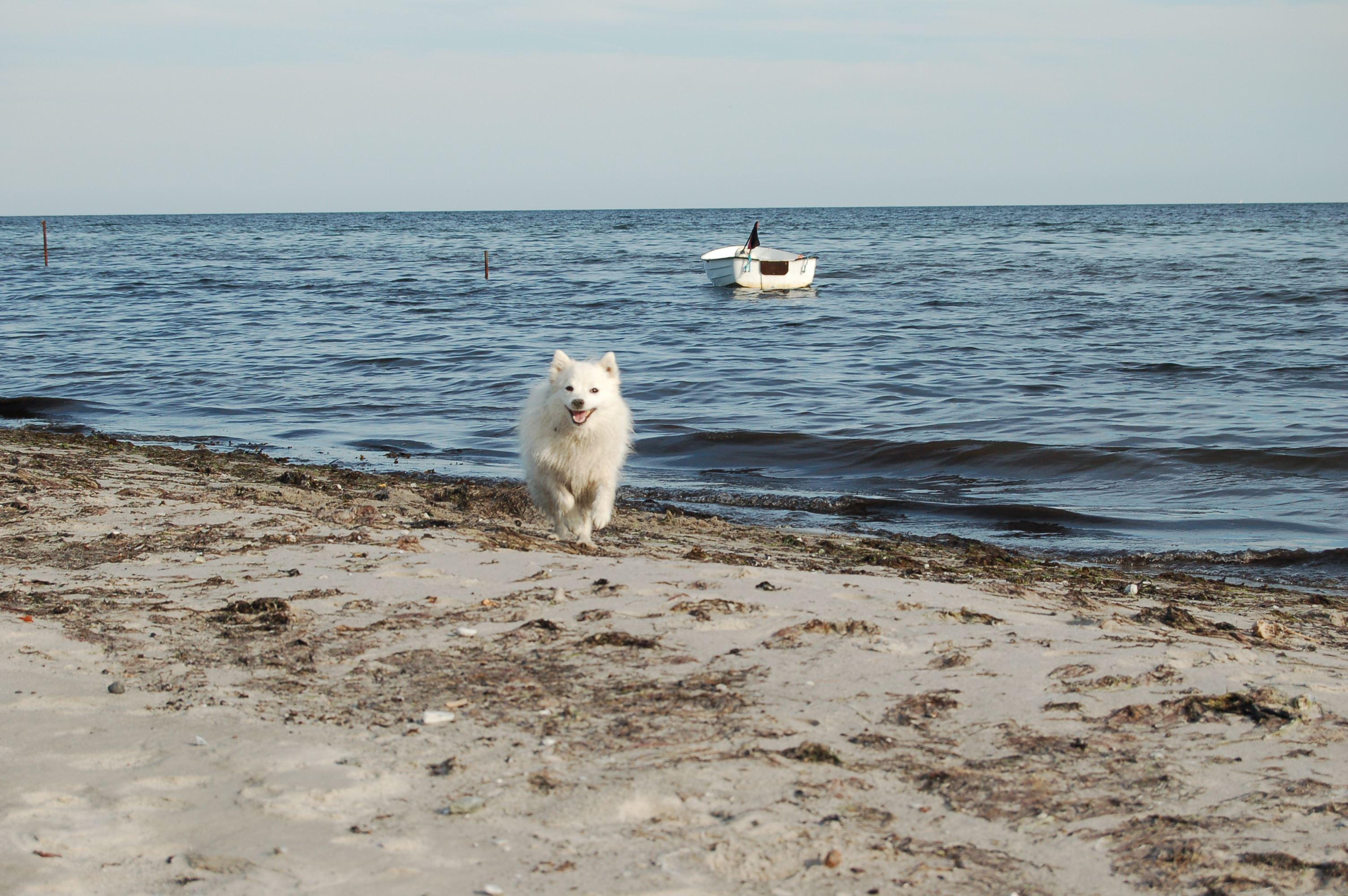 © Amanda Sjöqvist, Även våra fyrbenta vänner vill svalka sig under sommaren