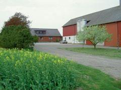 Bo på lantgård - Wäggarps gård
