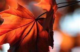 Autumn Fair in Skurup