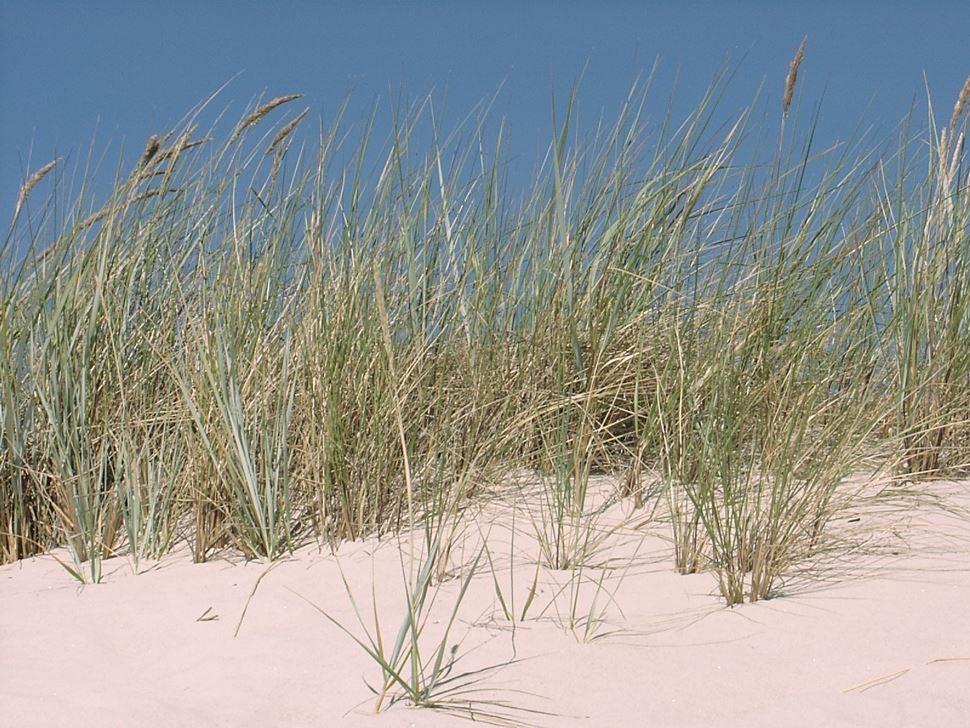 Beach - Vitemölla