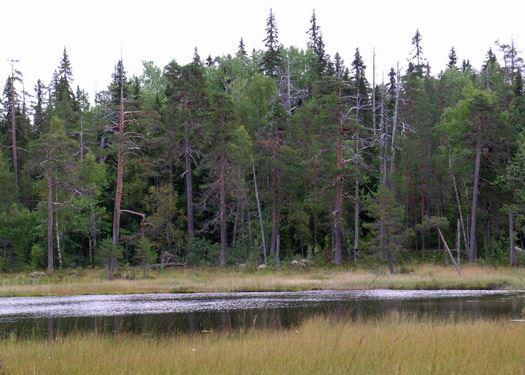 Ensjölokarnas naturreservat i Ramsjö