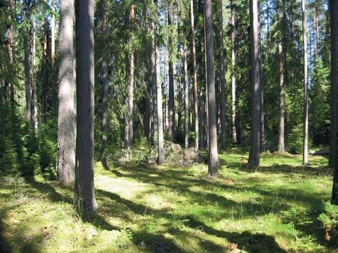 Hagåsen urskogsreservat