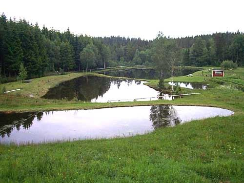 Camp Mayfly - Röena