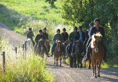 Väbylunds Islandshästar