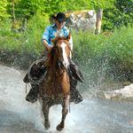 Hagströms Hästar