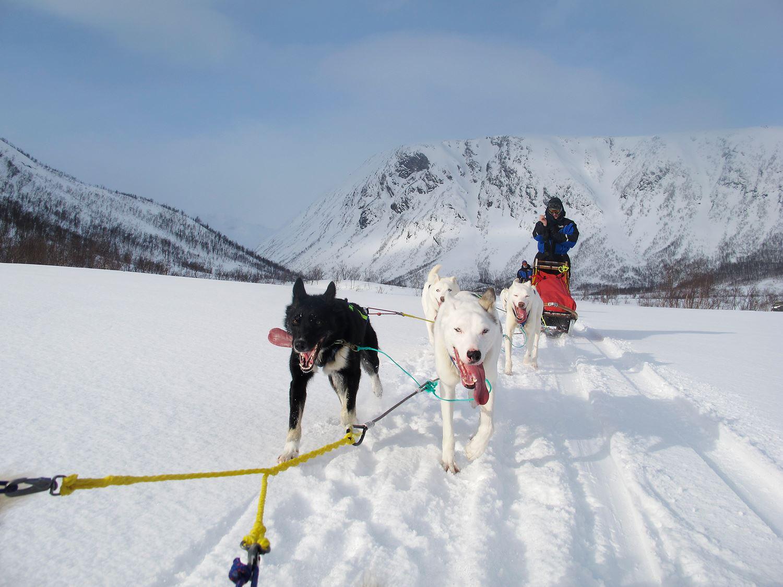 One Day Dog Sledding Expedition – Tromsø Villmarkssenter