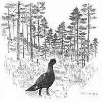 Teckning: Sören Holmquist, Nysäterns Naturreservat