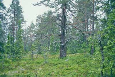 Länsstyrelsen Dalarna, Långsjöblick