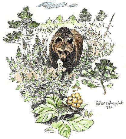 Björnåsen