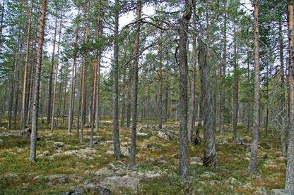 Länsstyrelsen Dalarna, Floj Naturreservat
