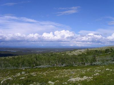 Ville Pokela, Drevfjällens naturreservat