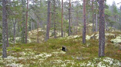 Södra Trollegrav