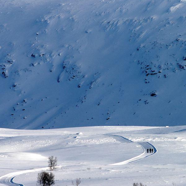 Sam Hedman,  © Visit Hemavan Tärnaby , Vindelfjällens naturreservat