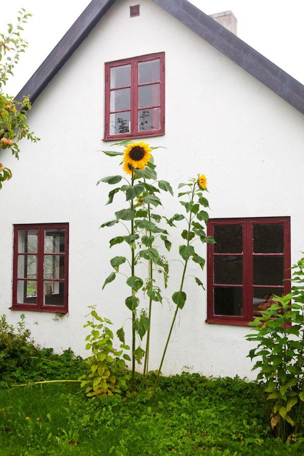 House in Maglehem (Sonja och Bo Nilsson)
