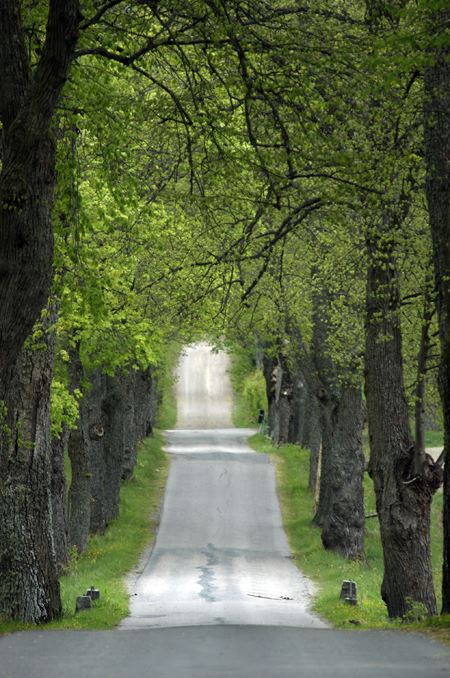 The alley way to Chateaux Yxtaholm