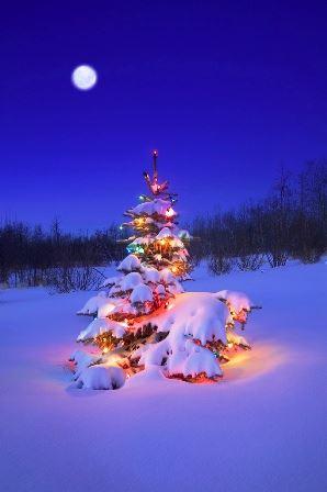 Bindning av julkransar