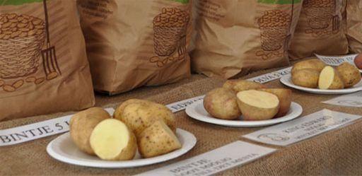 Pantoffelmarknad in Skivarp