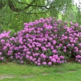 Arboretet i Hallevik - haver