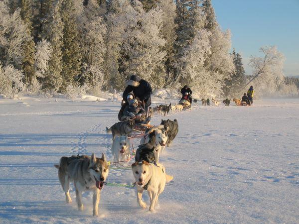 Hundspann med Åre Sleddog Adventures