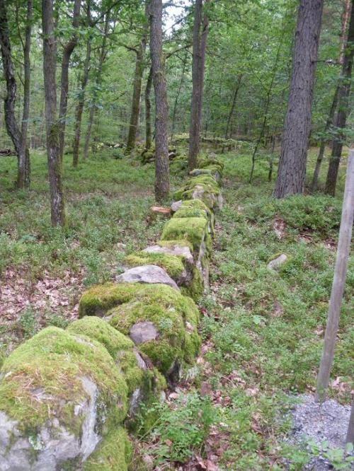 Systrarnas Stig i Mångfaldens Skog