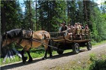 Det ska vi fira med häst och vagn
