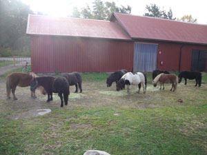 Belle Star Ranch